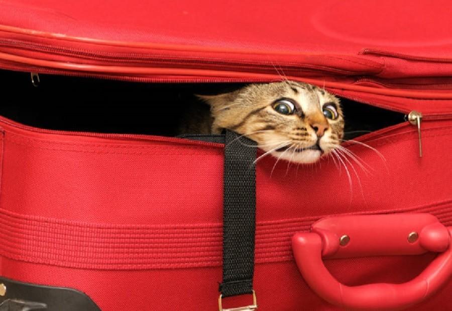 Бога ради, не забудьте в путешествие с собой кота!