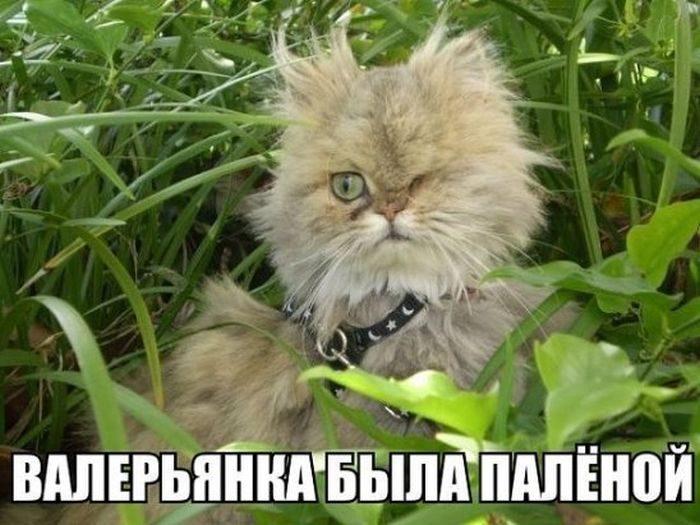 Почему коты сходят с ума после валерьянки? (+ видео)