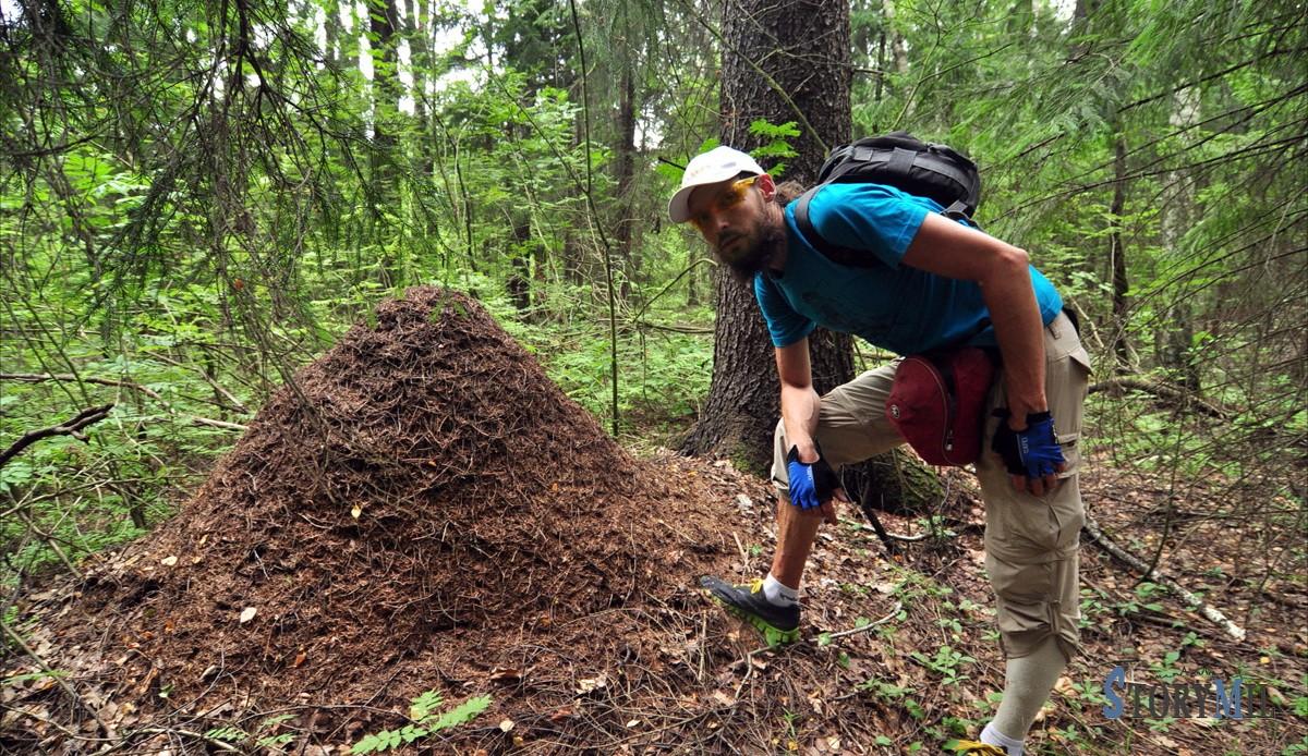 Самые странные профессии мира: Ловец муравьев