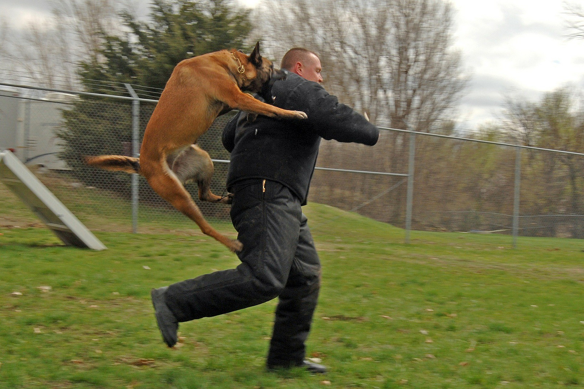 Как защитить себя, если напала собака?