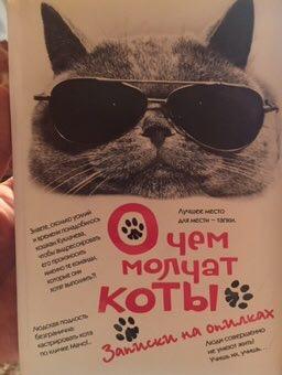 О чем молчат коты: как поднять настроение